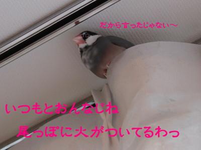 b0158061_228327.jpg