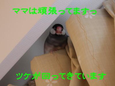 b0158061_228943.jpg