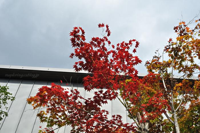 秋ドライブ-湯布院①-_f0234062_2147249.jpg