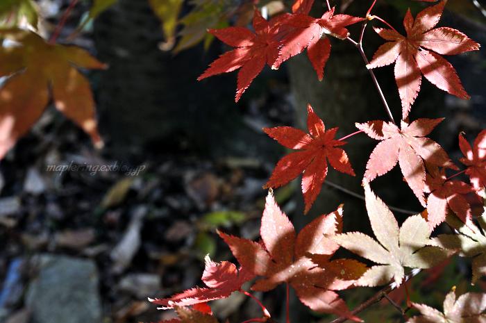 秋ドライブ-湯布院①-_f0234062_21473460.jpg