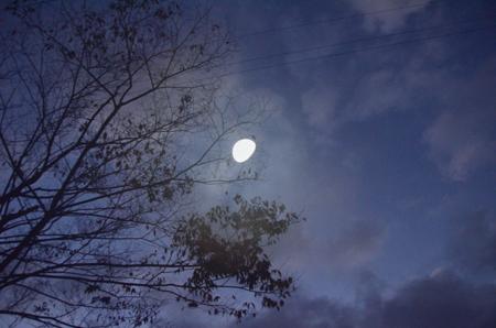 早朝散歩「太陽が丘」_e0164563_11333181.jpg