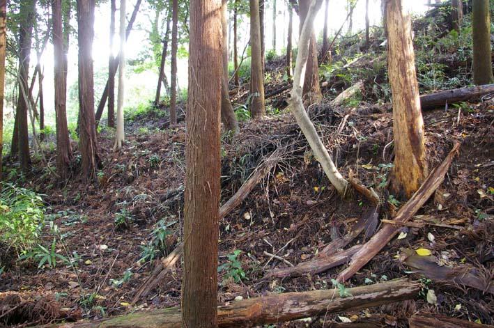 六国見山森林公園に切り倒されたスギがそのまま放置_c0014967_18564585.jpg
