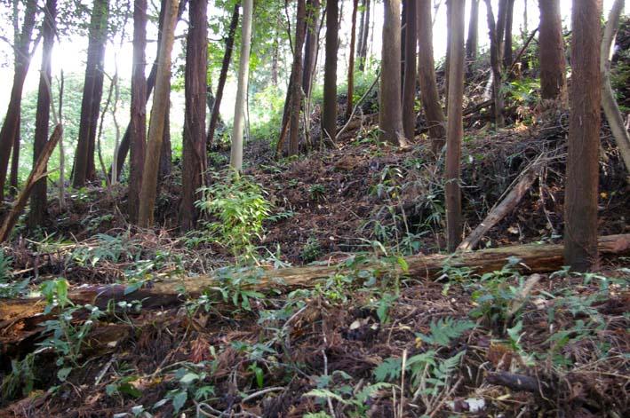 六国見山森林公園に切り倒されたスギがそのまま放置_c0014967_18573372.jpg