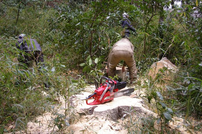 六国見山森林公園に切り倒されたスギがそのまま放置_c0014967_193836.jpg