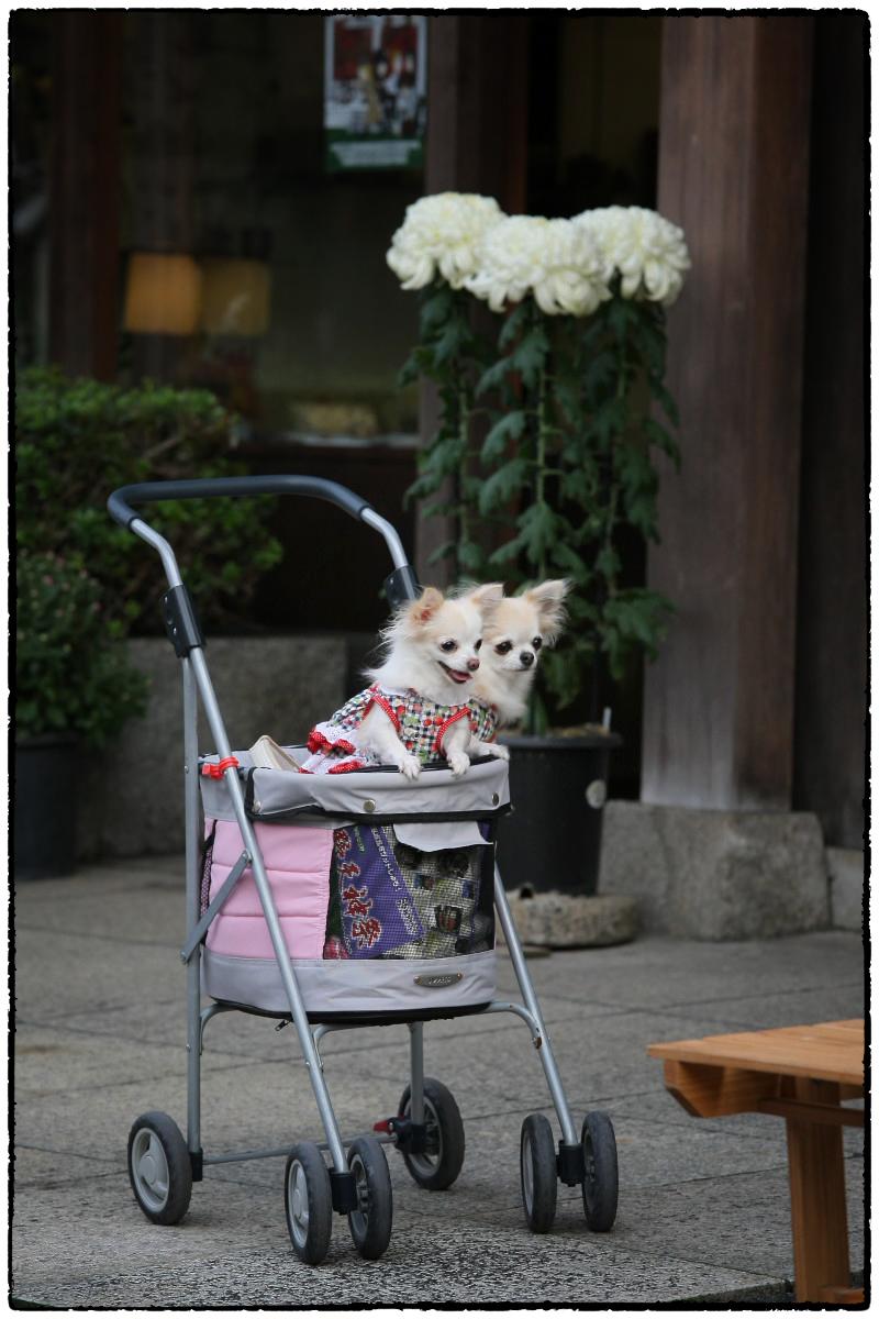 犬わん_f0021869_20415347.jpg