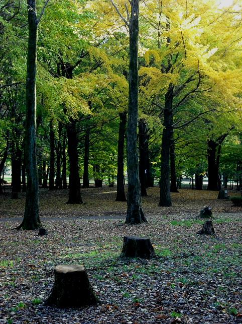 東京・都立野川公園の紅葉_e0165983_1373511.jpg