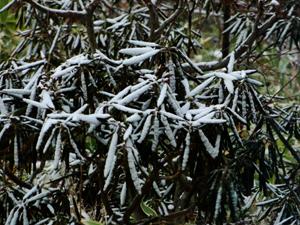 雪降り_e0120896_6465033.jpg