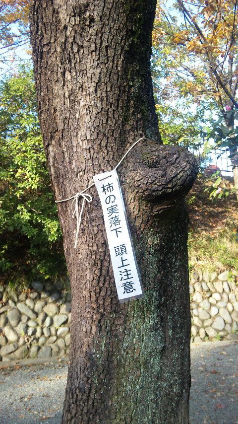 ていねいな暮らし*「武相荘」旧白洲邸_d0167002_1513581.jpg
