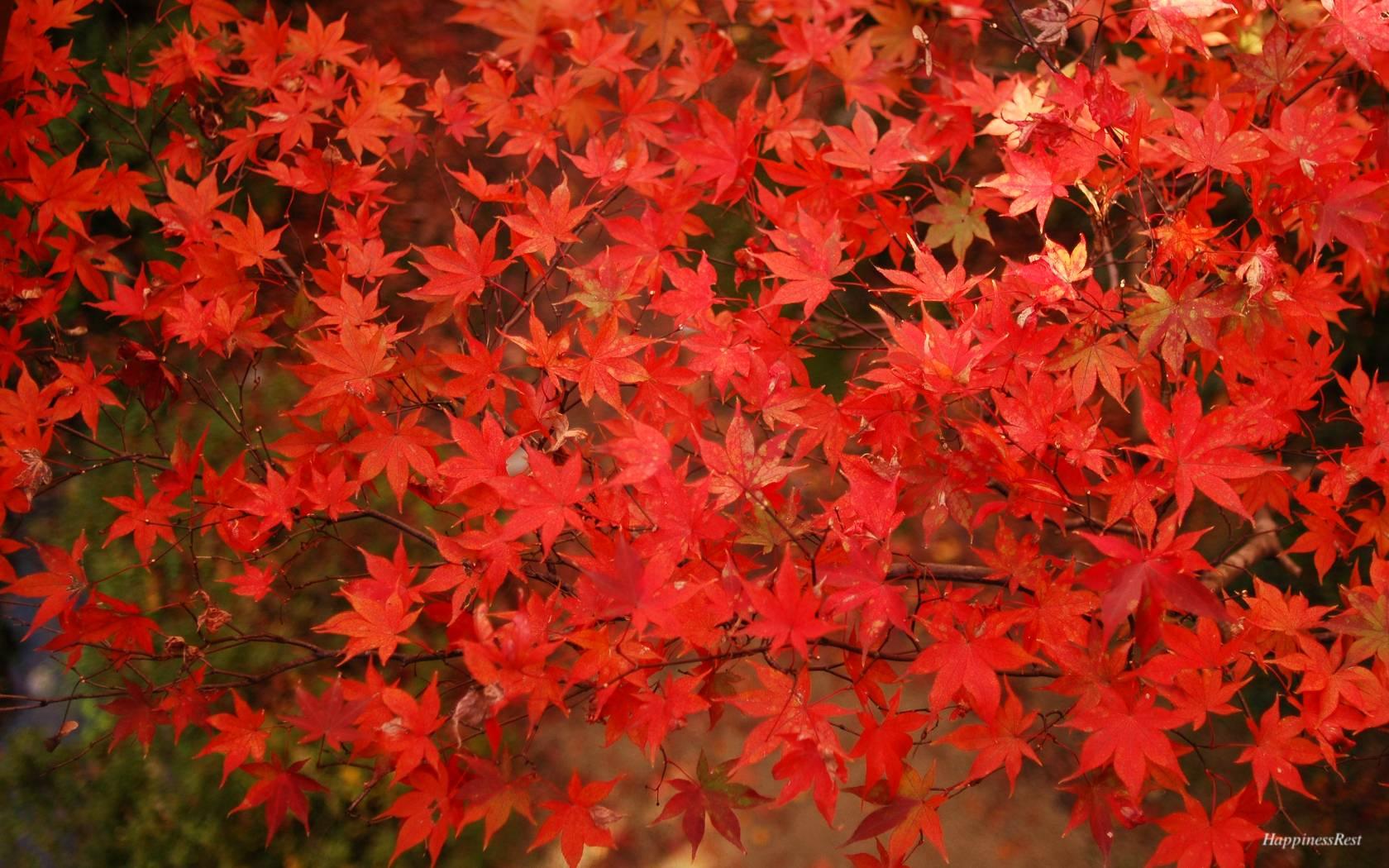 http://happrest.exblog.jp/