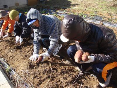 サツマイモ収穫祭☆_a0154110_11542982.jpg