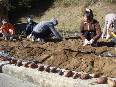 サツマイモ収穫祭☆_a0154110_11543633.jpg