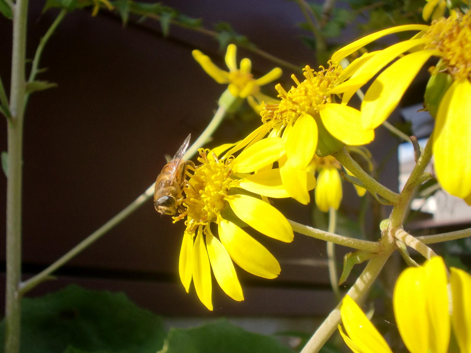 花が咲きました_e0240310_1322561.jpg