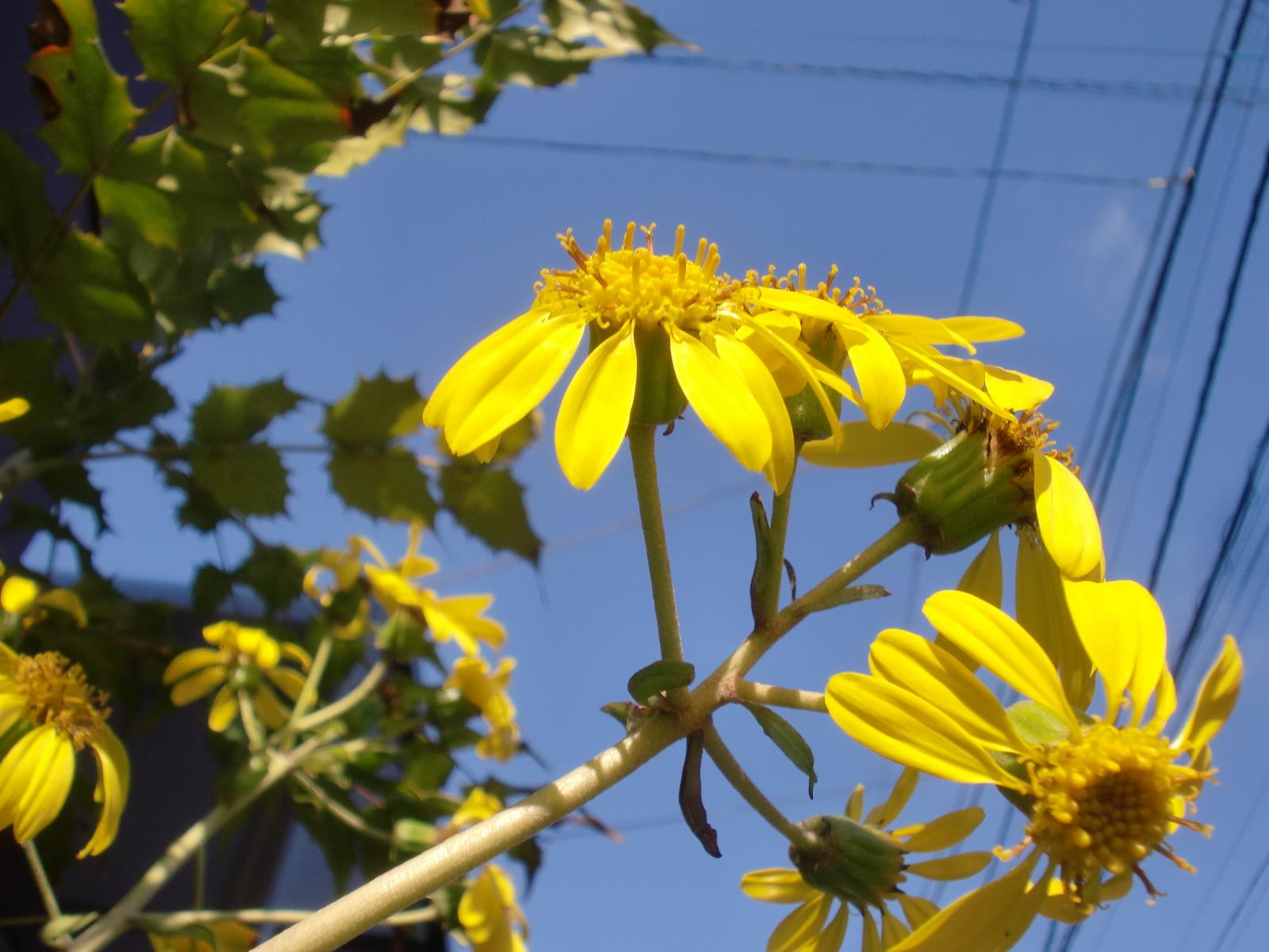 花が咲きました_e0240310_13232376.jpg