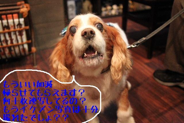 b0130018_13453212.jpg