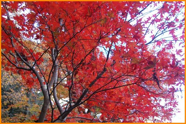 山中温泉 今日の紅葉の巻_a0041925_23125190.jpg