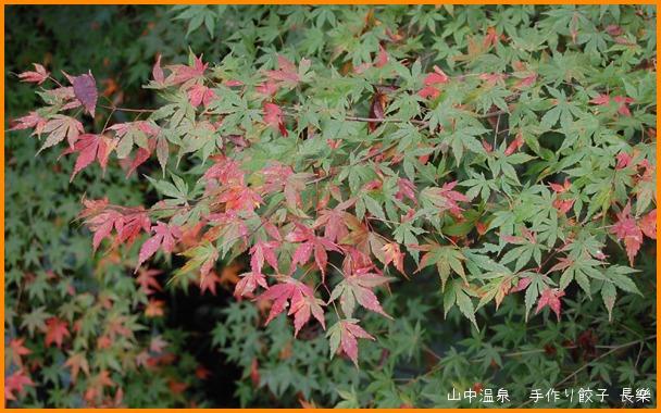 山中温泉 今日の紅葉の巻_a0041925_2314329.jpg
