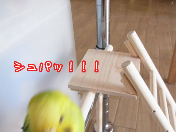 d0246634_1504454.jpg