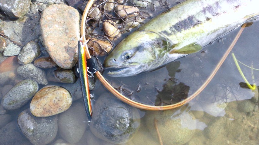 ・FISHING REPORT  _a0165135_13131352.jpg