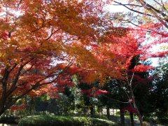 富士川街道 第1回_f0019247_1954383.jpg