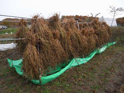 蕎麦の製粉 試行錯誤が始まる_c0063348_2216353.jpg
