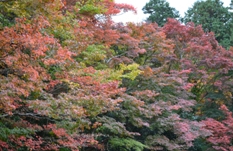 京都もみじ便り_e0139459_1935245.jpg