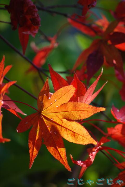 後残り少ないを秋~~_b0189573_15104196.jpg