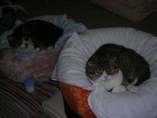 我家には猫がいる_d0183174_20492770.jpg