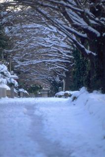 冬本番_f0118184_14415129.jpg