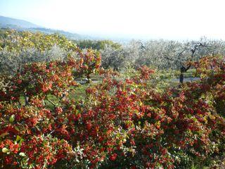 サン・ダミアーノ修道院への道_c0203401_14363049.jpg