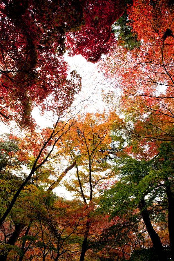瑞宝寺公園2011 (2)_b0043304_22244547.jpg