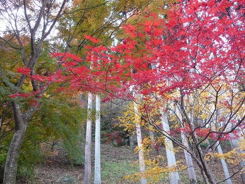 紅葉の旅-みちのく-_f0223914_10194397.jpg