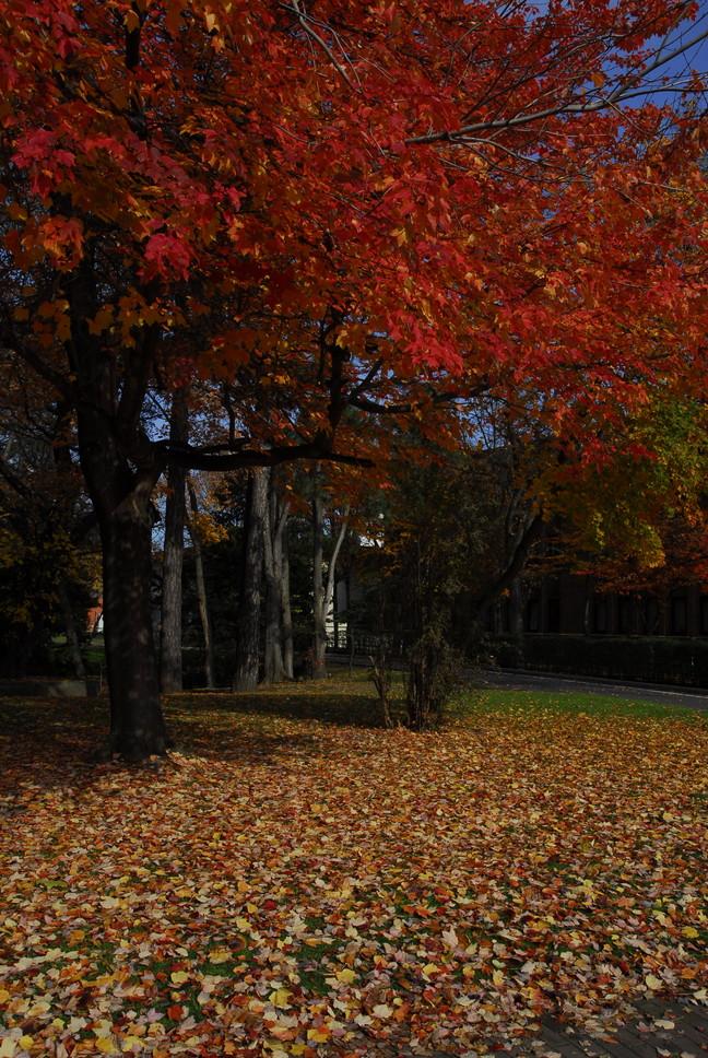 2011年11月 晩秋の北大キャンパス_c0219616_1928233.jpg