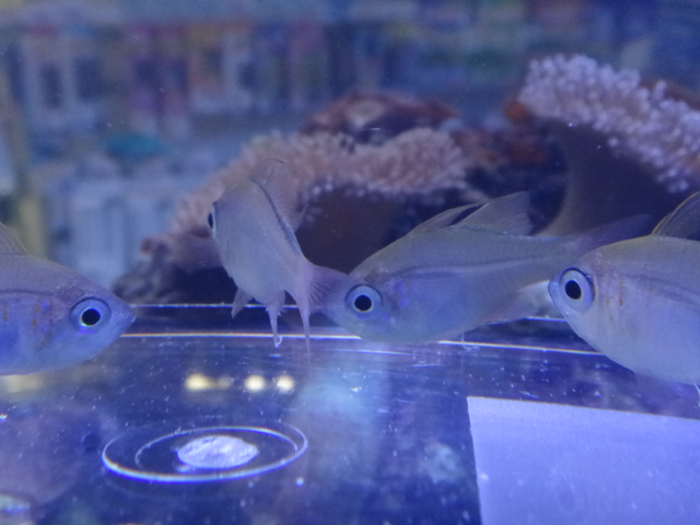 海水魚・サンゴ・水草・淡水魚_f0189122_12514060.jpg