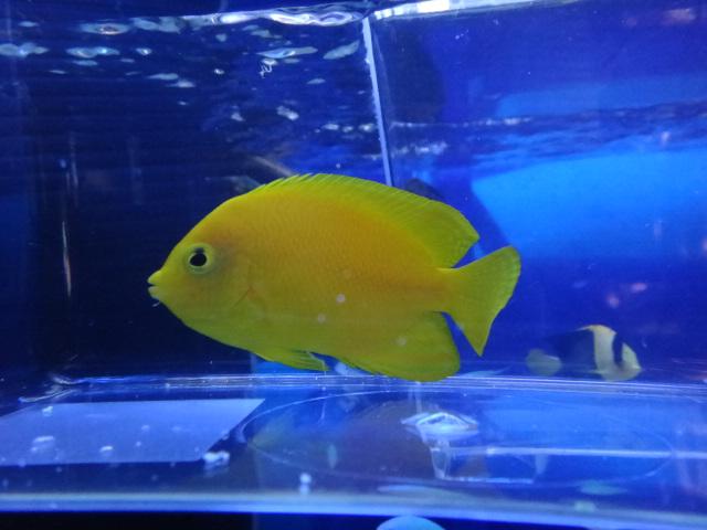 海水魚・サンゴ・水草・淡水魚_f0189122_12551760.jpg
