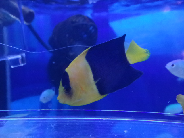 海水魚・サンゴ・水草・淡水魚_f0189122_1255456.jpg