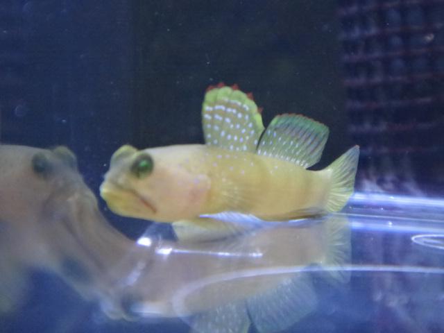 海水魚・サンゴ・水草・淡水魚_f0189122_12564654.jpg