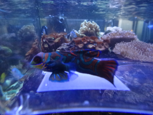 海水魚・サンゴ・水草・淡水魚_f0189122_12572492.jpg