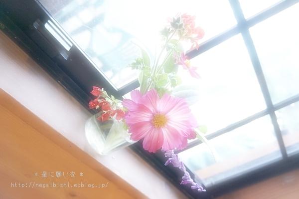 暖かな窓辺が・・・_b0233456_1742417.jpg