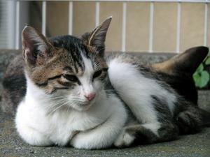 猫もふもふる寒さ_a0001971_0515872.jpg