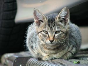 猫もふもふる寒さ_a0001971_0521688.jpg