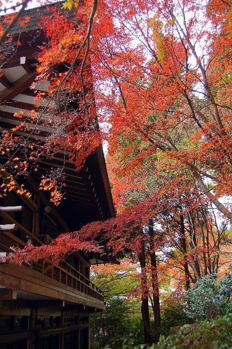 ♪京都~大原三千院♪_c0057390_20361341.jpg