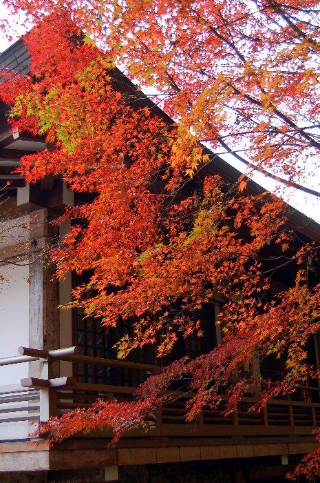 ♪京都~大原三千院♪_c0057390_20433517.jpg