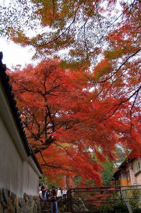 ♪京都~大原三千院♪_c0057390_20442814.jpg