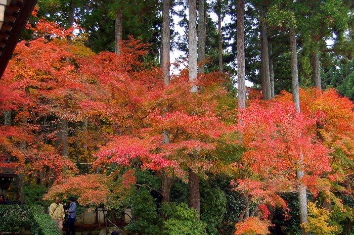 ♪京都~大原三千院♪_c0057390_20443593.jpg