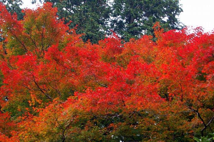 ♪京都~大原三千院♪_c0057390_20465942.jpg