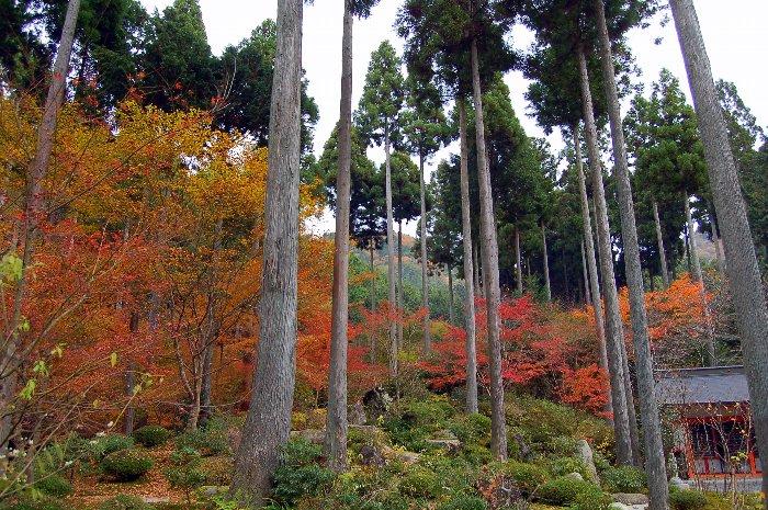 ♪京都~大原三千院♪_c0057390_20473534.jpg