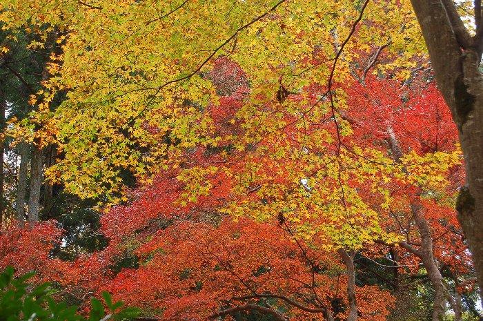 ♪京都~大原三千院♪_c0057390_20474166.jpg