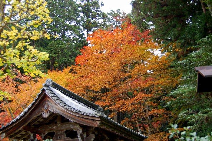 ♪京都~大原三千院♪_c0057390_2047463.jpg