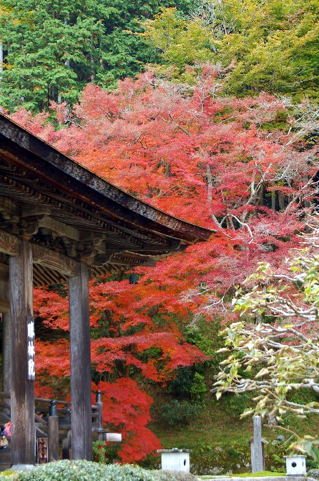 ♪京都~大原三千院♪_c0057390_20475486.jpg