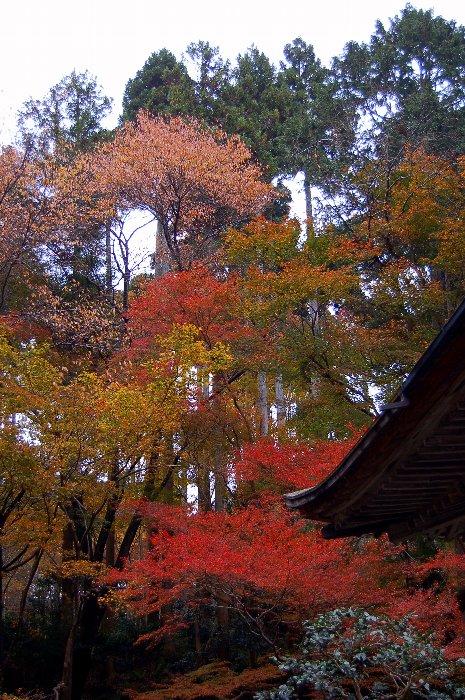 ♪京都~大原三千院♪_c0057390_20481316.jpg
